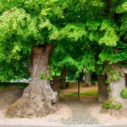 image de Der Dexheimer Friedhof